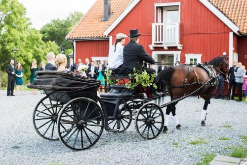 Brudpar som anländer med häst och vagn